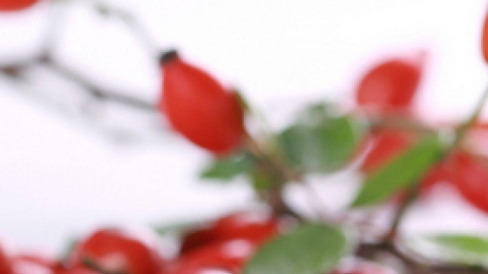 Лесни билкови рецепти за трудния ревматоиден артрит | онлайн магазин orientandoo.com