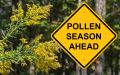 Кои алергии са типични за есента?