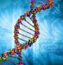 За хромозомните аберации и анеуплодия – в няколко примера