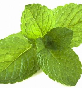 4 етерични масла за повишаване на имунитета