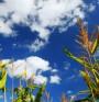 Биогорива - причина за замърсяване на въздуха
