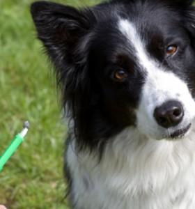 Отбелязваме Деня на ветеринарните лекари