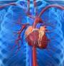 За някои нарушения на сърдечносъдовата система (видео)