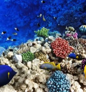 Отровни морски риби – рисковете за здравето от среща с тях