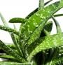 3 билки, полезни при проблеми със стомаха