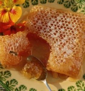 Пчелният мед – източник на здраве и дълголетие
