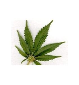 Пушенето на марихуана повишава риска от рак на тестисите