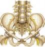 Костно-мускулен родилен път - какво представлява