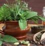Полезни билки за щитовидната жлеза