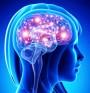 Мозък – непопулярни факти