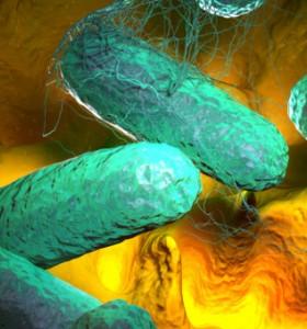 Салмонела може да лекува рак