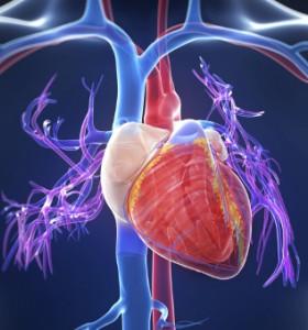 TAVI - алтернативно лечение на аортна стеноза