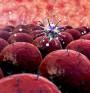 Откриха връзка между височината и риска от рак