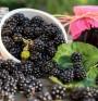 Черни малини – новата суперхрана