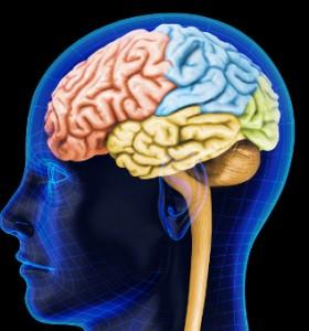 Неверни факти за мозъка (видео)