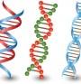 Пространствени форми на спиралите на ДНК - от А до Z