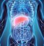 Черен дроб – най-тежкият орган с ключови функции