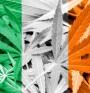 Ирландия ще легализира марихуаната за медицински цели?