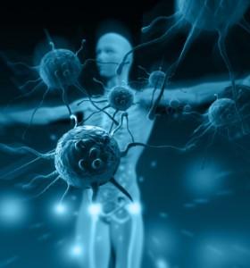 Имунитет: Имунната система – какво е и къде се намира?