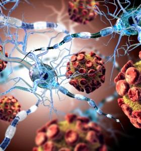 Молекули: Тъканна регенерация и невротрофични фактори, 1