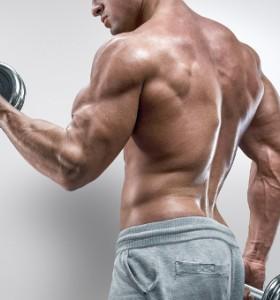 Мускули – какво ги кара да растат?