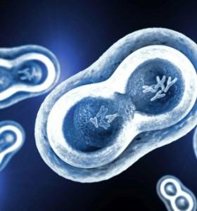 РНК – копира, превежда и синтезира