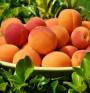 Кайсии – източник на ценни витамини