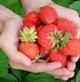 Червени храни – защо са полезни през лятото?