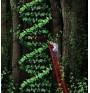 Матрична (информационна) РНК – шапка и опашка