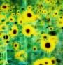 Творците носят ген, отговорен за психичните разстройства