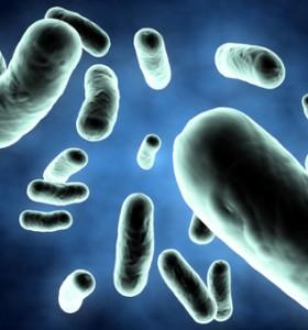 Пробиотиците са добрите бактерии в нашето тяло