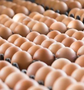 Фипронилът в яйцата - заради опасни препарати