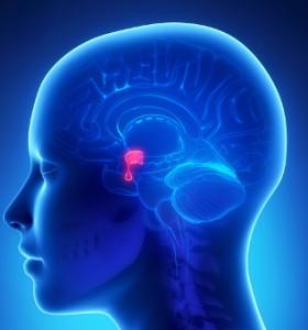 Тумори на хипофизата - рискови фактори, агресивност, класификация