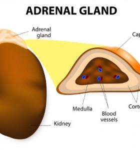 Адренокортикален карцином - тумор на надбъбречната жлеза