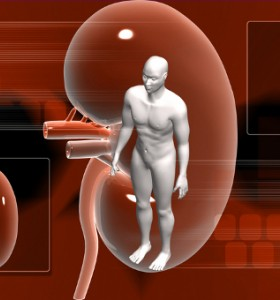 Захарният диабет уврежда бъбреците