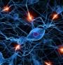 Черепномозъчни нерви – за какви функции отговарят?