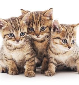 4 ползи от котката вкъщи