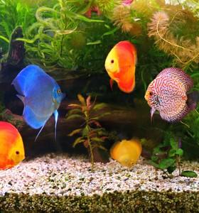 Как ни помага аквариумът вкъщи?
