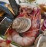 Колко опасни са суровите рибни продукти?