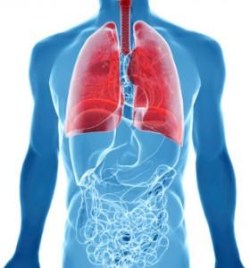 Белите дробове – превръщат венозната кръв в артериална, 1 част