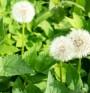 Лечение на анемия с билки – кои помагат?