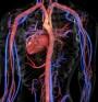 Нов тип антиоксиданти подмладява кръвоносните съдове