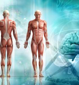 Трансплантиране на органи от животно на човек - възможностите?