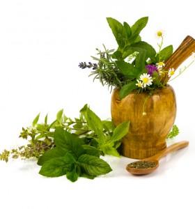 4 билки за облекчаване на сутрешното гадене