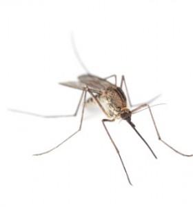 Епидемия от жълта треска – най-тежката от 50 години насам