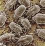 Рискови фактори за възникване на алергии