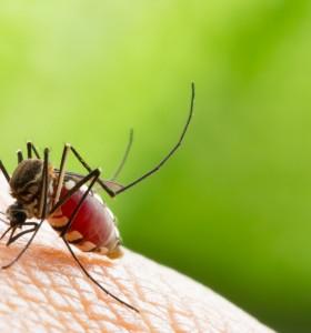 Натурални средства след ухапване от комар