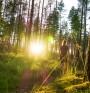 Как можем да извлечем максимална полза от природата?