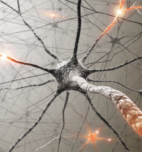 Огледала в мозъка: как мозъкът ни разбира чуждите действия?