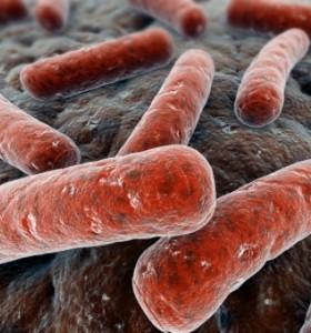 Pseudomonas aeruginosa – широко разпространен. Микробиология